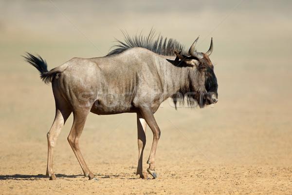 Azul poeira deserto África do Sul natureza luz Foto stock © EcoPic