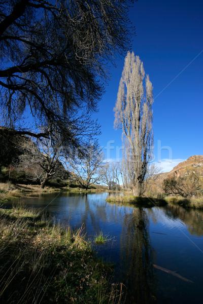 Staw drzew zimą krajobraz wody topola Zdjęcia stock © EcoPic