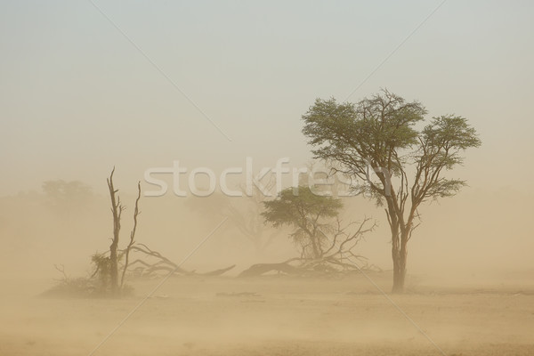 Sand storm - Kalahari desert Stock photo © EcoPic