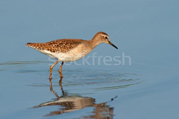 Foto stock: água · África · do · Sul · natureza · pássaro · pernas · África