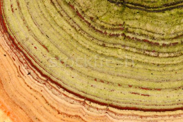árvore fungo ver abstrato Foto stock © EcoPic