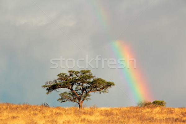 Rainbow landscape Stock photo © EcoPic