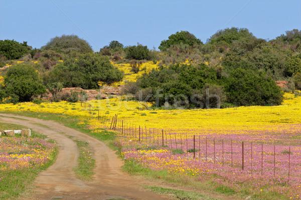 Vadvirág tájkép vidéki út színes vad virágok Stock fotó © EcoPic