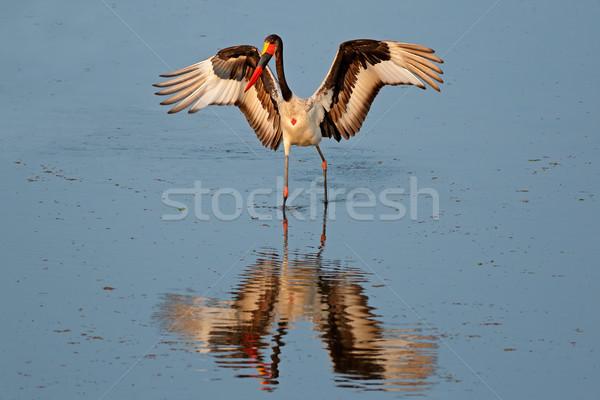 Gólya park Dél-Afrika természet madár szárnyak Stock fotó © EcoPic