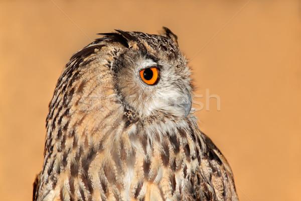 Oehoe portret ogen natuur Stockfoto © EcoPic