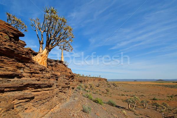 Boom landschap berg bomen aloë noordelijk Stockfoto © EcoPic