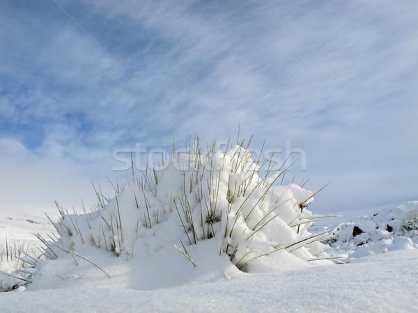 Snow landscape Stock photo © EcoPic