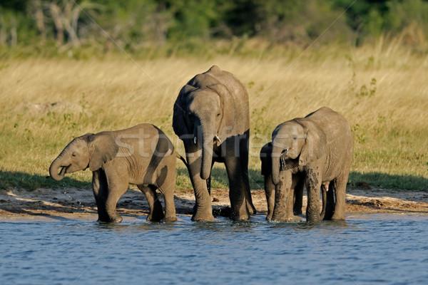 アフリカ 3  小さな 公園 ジンバブエ ストックフォト © EcoPic