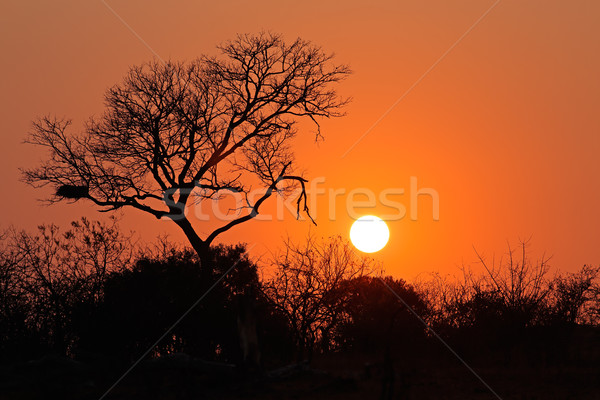 Sunrise - Kruger National Park Stock photo © EcoPic