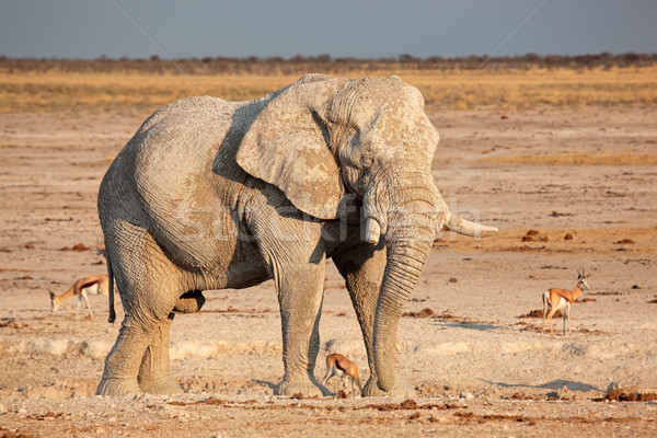 African elephant covered in mud Stock photo © EcoPic
