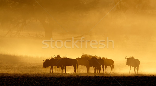 Blue wildebeest in dust Stock photo © EcoPic