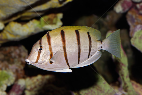 Elítélt vízalatti kilátás víz tenger óceán Stock fotó © EcoPic