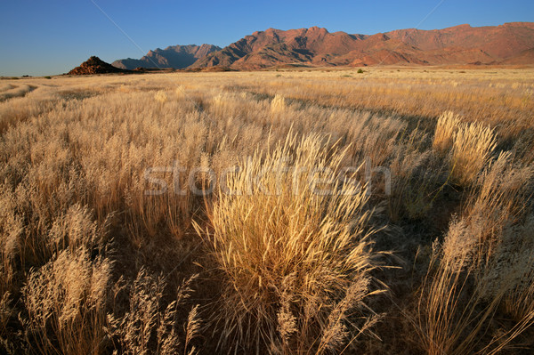 Grassland landscape Stock photo © EcoPic