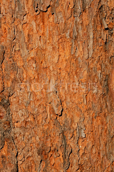Tree bark background Stock photo © EcoPic