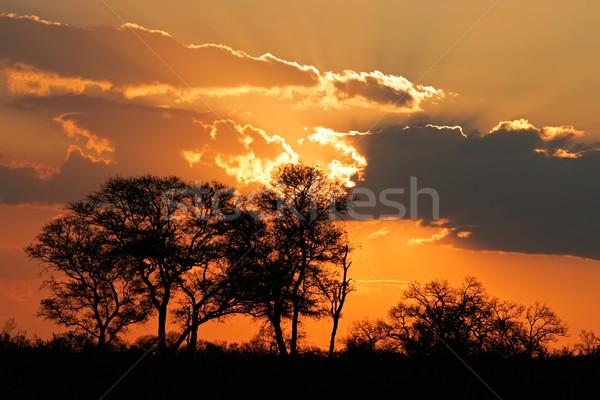 Foto stock: Sabana · puesta · de · sol · África · árboles · parque · Sudáfrica