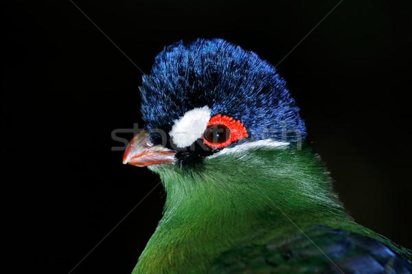 Ritratto colorato nero uccello animale african Foto d'archivio © EcoPic