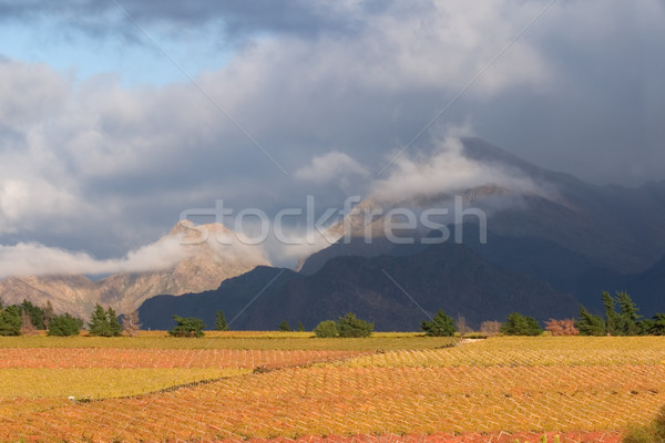 Stockfoto: Wijngaard · landschap · bergen · Cape · Town · South · Africa · veld