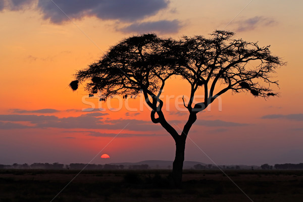 Stock photo: Sunset with silhouetted tree