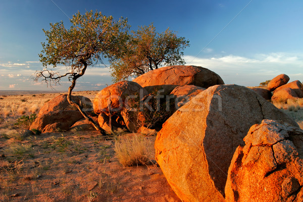 Granit paysage arbres sunrise montagne Namibie Photo stock © EcoPic