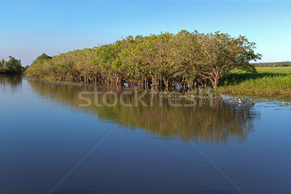 Trees with reflections Stock photo © EcoPic