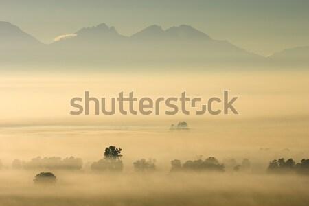Bomen mist achtergrond bergen licht Stockfoto © EcoPic