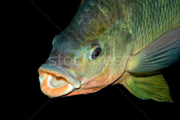 Nembwe fish portrait Stock photo © EcoPic