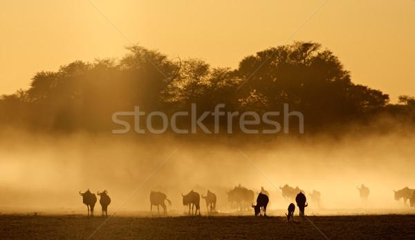 Azul poeira nascer do sol deserto África do Sul natureza Foto stock © EcoPic