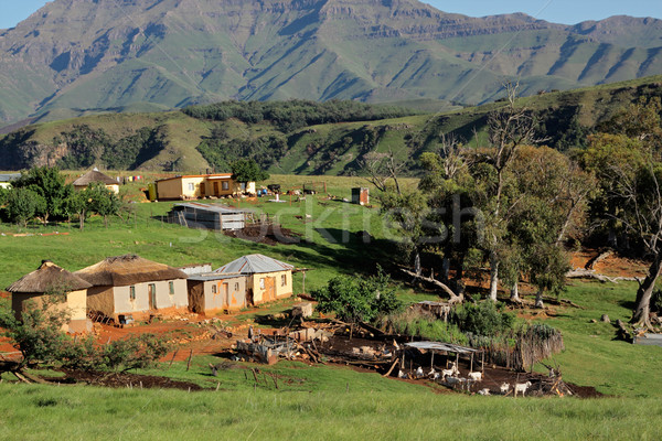 Rural settlement and livestock Stock photo © EcoPic
