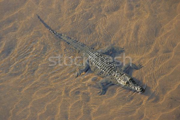 крокодила ЮАР воды глаза рот Сток-фото © EcoPic