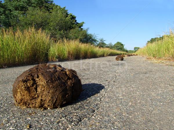 Elephant dung Stock photo © EcoPic