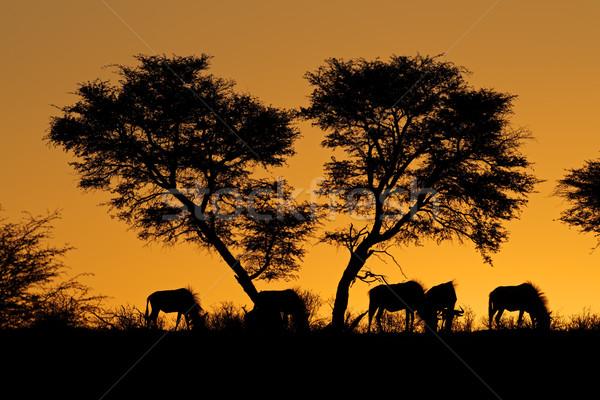 Tree and wildebeest silhouette Stock photo © EcoPic