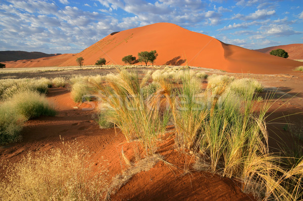 Desert landscape Stock photo © EcoPic