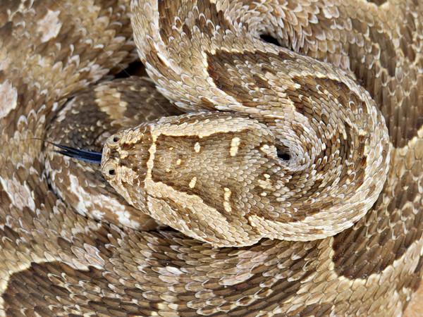 Enrolado serpente balança naturalismo ecologia Foto stock © EcoPic