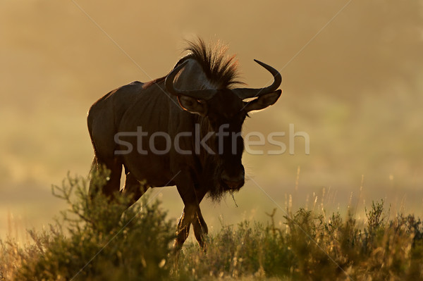 Blauw stof zonsopgang woestijn South Africa natuur Stockfoto © EcoPic