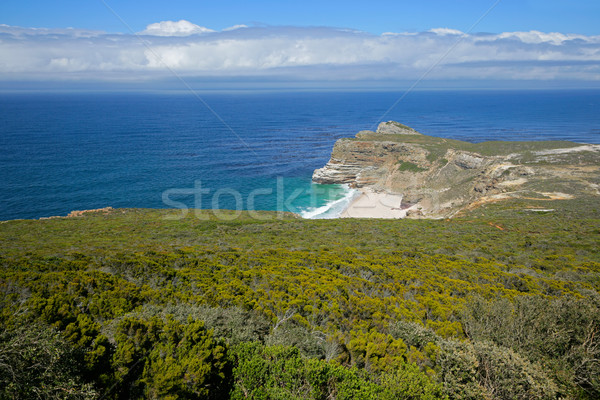 Cape of Good Hope Stock photo © EcoPic