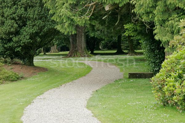 Nyugalmas park út buja zöld gyep Stock fotó © EcoPic