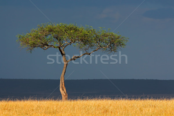 African landscape Stock photo © EcoPic