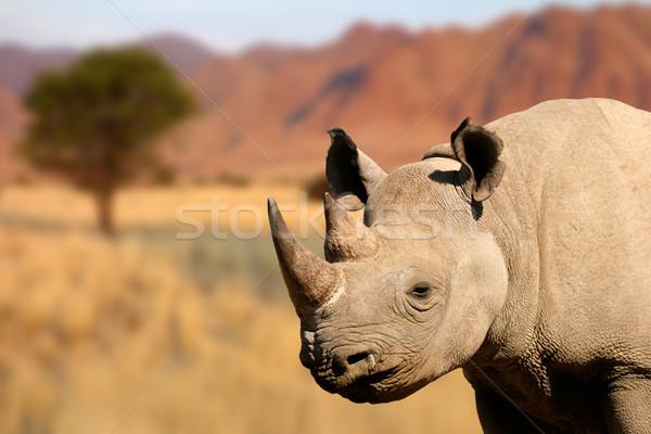 Preto rinoceronte retrato natureza cabeça africano Foto stock © EcoPic