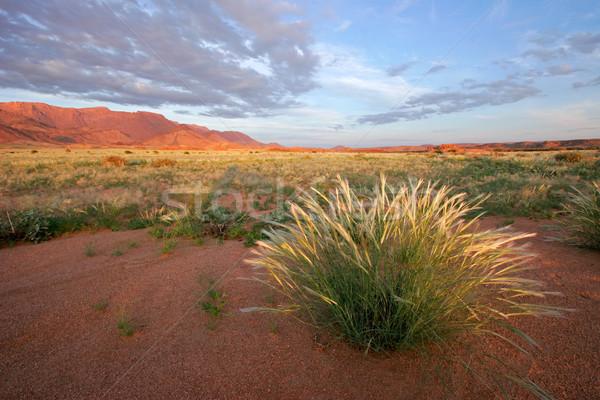 Grassland landscape Stock photo © EcoPic