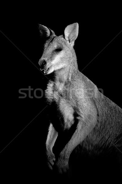 ágil monocromático retrato pele bonitinho ao ar livre Foto stock © EcoPic