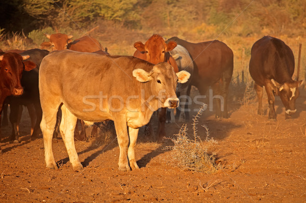 Gratis vee laat namiddag licht zuidelijk Stockfoto © EcoPic