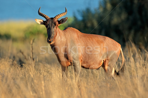 Naturelles habitat rare Afrique du Sud nature animaux Photo stock © EcoPic