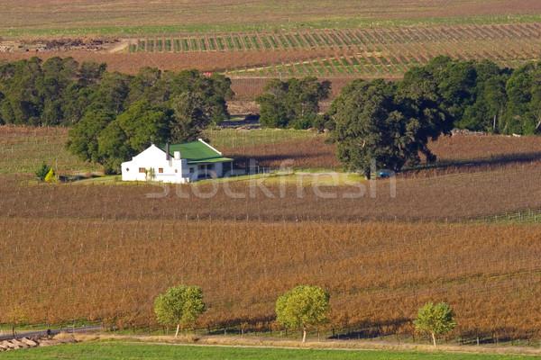 виноградник пейзаж Кейптаун ЮАР дома свет Сток-фото © EcoPic