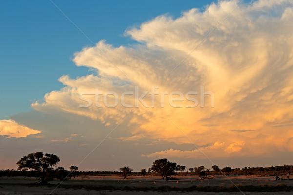 Kalahari desert cloudscape Stock photo © EcoPic