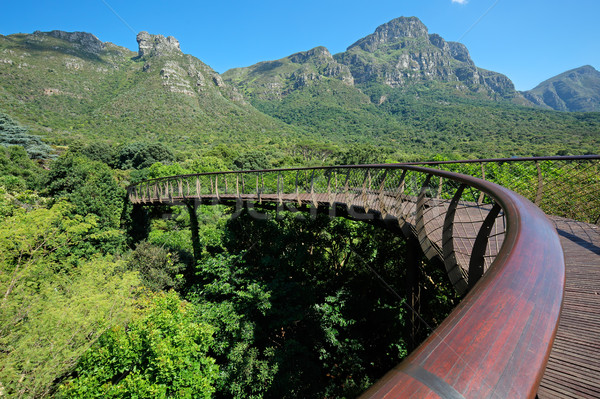 Kirstenbosch botanical gardens Stock photo © EcoPic