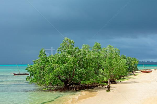 Tropische bomen regen wolken kust hemel Stockfoto © EcoPic