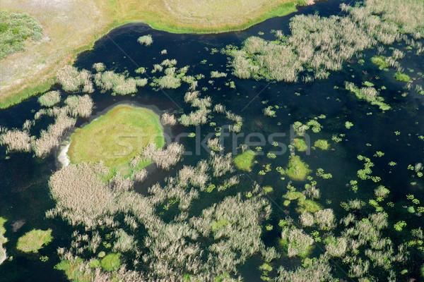 Coastal wetland Stock photo © EcoPic