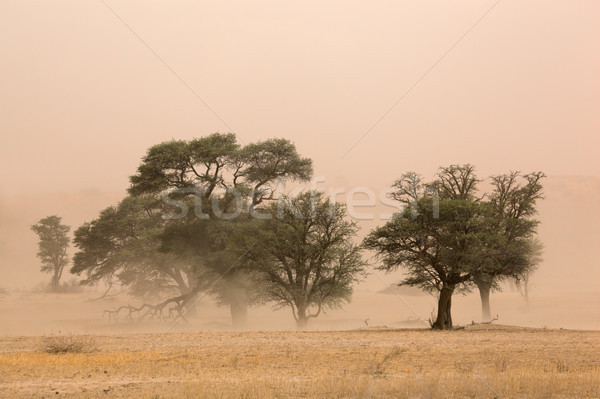 Sand storm Stock photo © EcoPic