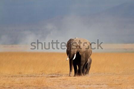 Stok fotoğraf: Afrika · fil · inek · genç · park · Kenya · doğa