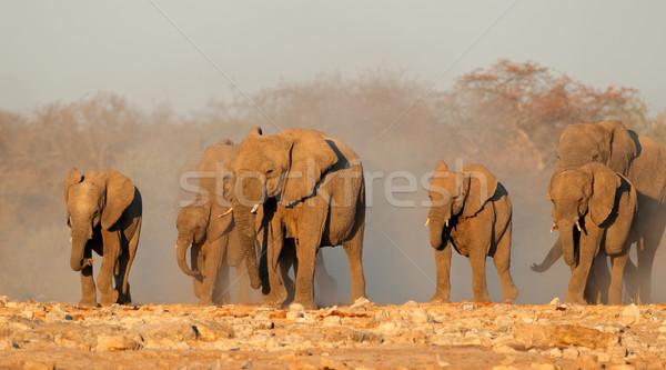 Afryki słonie pyłu słoń afrykański stado parku Zdjęcia stock © EcoPic